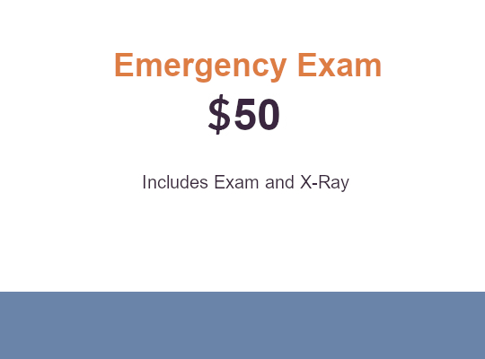 NewPatient Dental Emergency Exam Special
